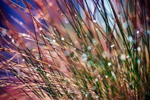 Grasses in Rain by Ursula Abresch