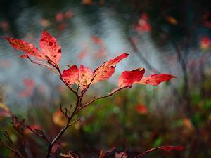 Huckleberries by Ursula Abresch