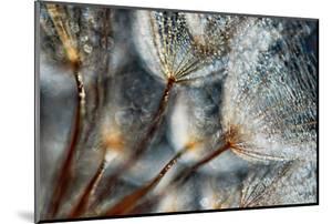 Imagine Seedlings by Ursula Abresch