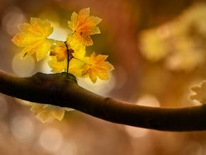 In Autumn 2 by Ursula Abresch