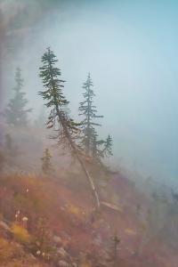 In Fog by Ursula Abresch