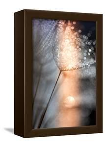 In My Winter Window by Ursula Abresch