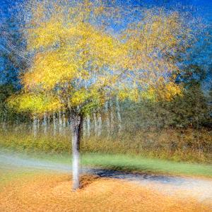 In the Round by Ursula Abresch