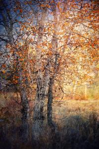 Kootenay Fall 2 by Ursula Abresch