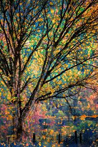 Kootenay Fall 3 by Ursula Abresch