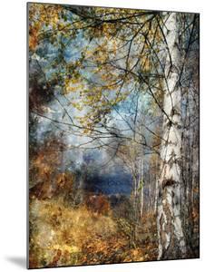 Kootenay Fall by Ursula Abresch