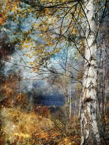 Kootenay Fall by Ursula Abresch