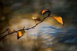 Leaves In Fall by Ursula Abresch