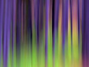 Lodgepoles by Ursula Abresch