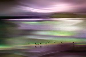 Migrations - Pink Sky by Ursula Abresch