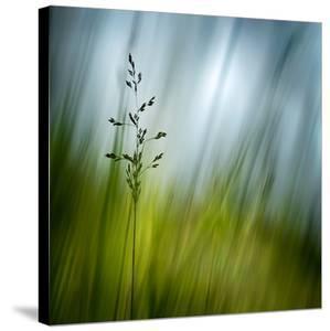 Morning Grass by Ursula Abresch