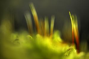 Moss 2 by Ursula Abresch