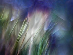 Needles by Ursula Abresch