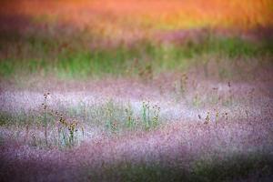 Norris Grasses by Ursula Abresch
