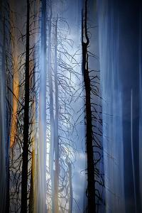 Old Trees by Ursula Abresch