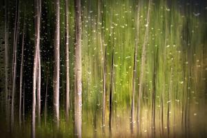 On a Rainy Day by Ursula Abresch