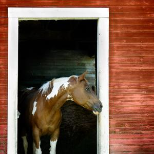 Palouse Horse by Ursula Abresch