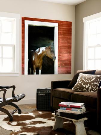 Palouse Horse