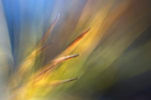 Pine Needles 2 by Ursula Abresch