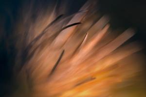 Pine Needles 3 by Ursula Abresch
