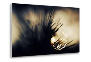 Pine Needles at Sunset by Ursula Abresch