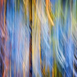 Pines by Ursula Abresch