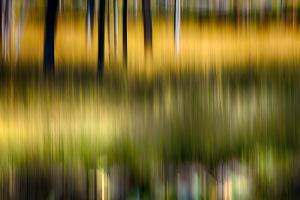 Pond Reflection by Ursula Abresch