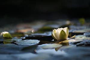 Reflection Pond by Ursula Abresch