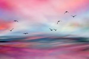 Rosewater by Ursula Abresch