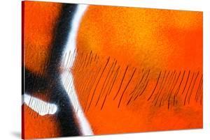 Scratches by Ursula Abresch
