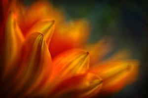 Shades of Orange by Ursula Abresch