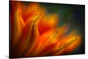 Shades of Orange by Ursula Abresch