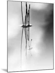 Silence by Ursula Abresch