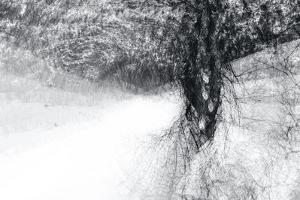 Snow Dancer by Ursula Abresch