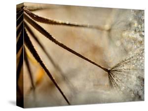 Sparkle by Ursula Abresch
