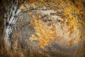Spirit of Autumn by Ursula Abresch