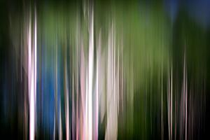 Spring Birches by Ursula Abresch