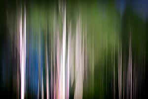 Spring Birches by Ursula Abresch