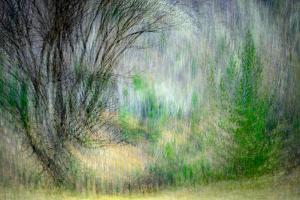 Spring Dance by Ursula Abresch