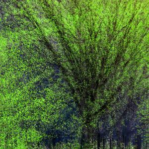 Spring Green by Ursula Abresch