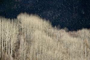 Spring Rain by Ursula Abresch