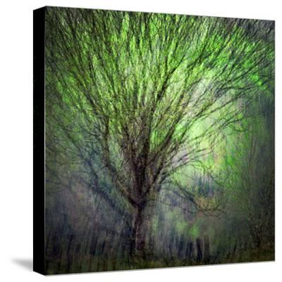 Spring Trees by Ursula Abresch
