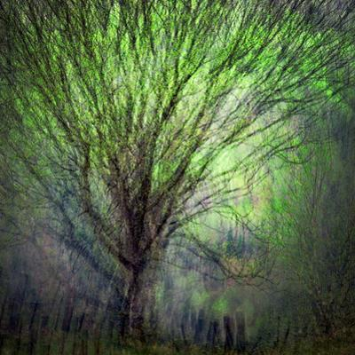 Spring Trees by Ursula Abresch