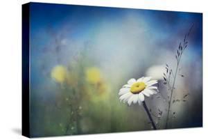 Summer Solstice by Ursula Abresch