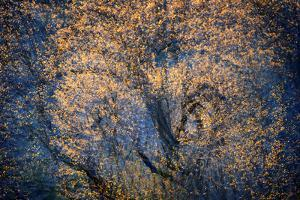 The Trees Have Eyes by Ursula Abresch