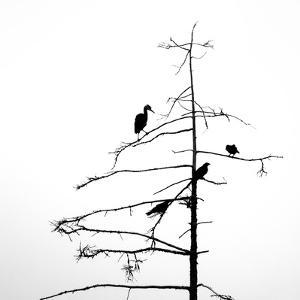 Three Crows and a Heron by Ursula Abresch