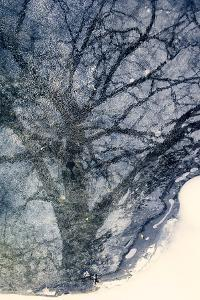 Tree on Ice by Ursula Abresch