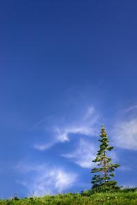 Tree Space 1 by Ursula Abresch