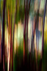 Trees by Ursula Abresch