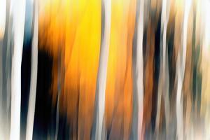White Birches by Ursula Abresch